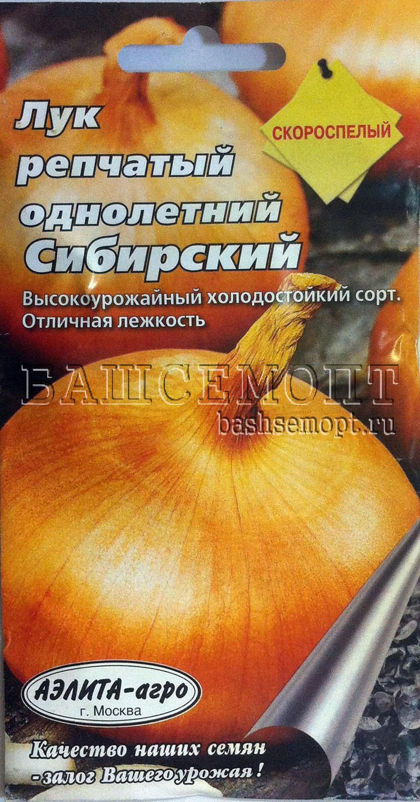 Лук сибирский однолетний выращивание 10