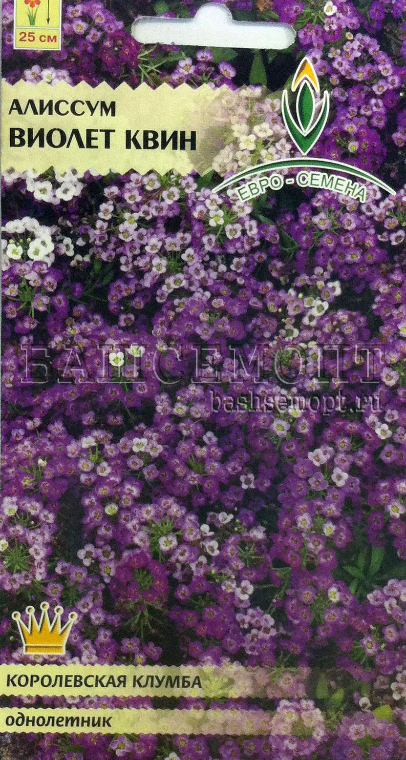 Цветы алиссум посадка и уход фото