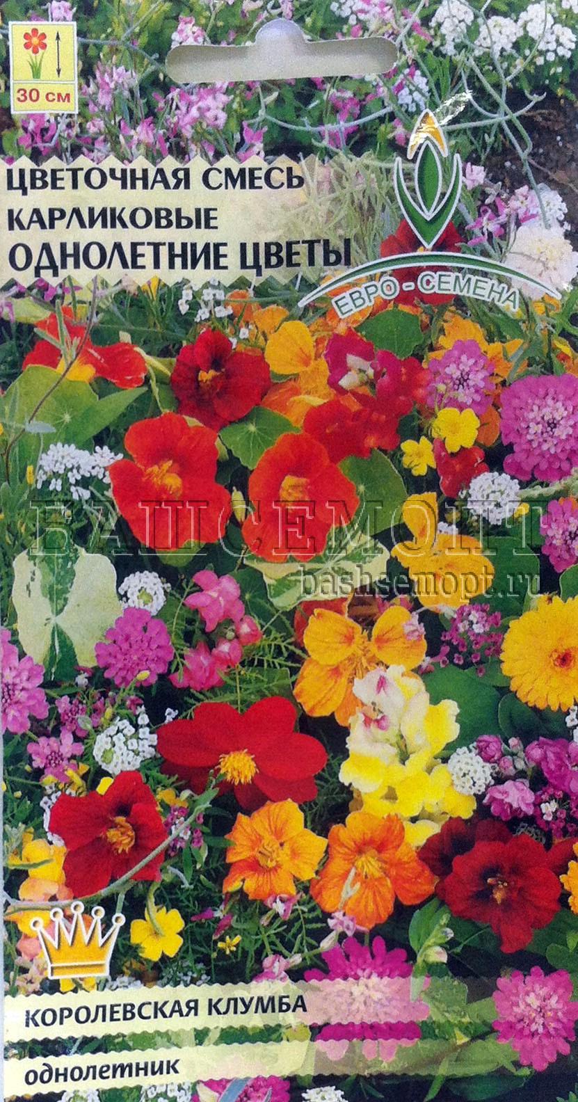 Низкорослые цветы однолетки фото